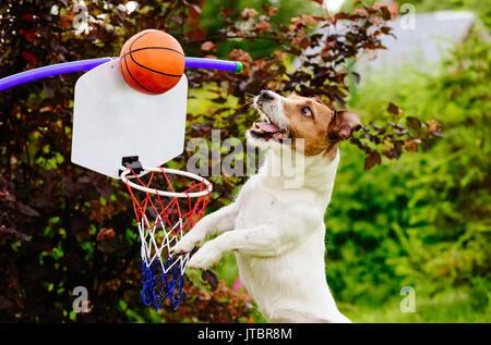 Lustige Basketballspieler fang Ball oben Hoop - Stockfoto