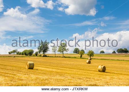 Runde Strohballen auf einem Feld zwischen der Schnitthöhe dankelshausen und bühren, Samtgemeinde Dransfeld, Göttingen, - Stockfoto