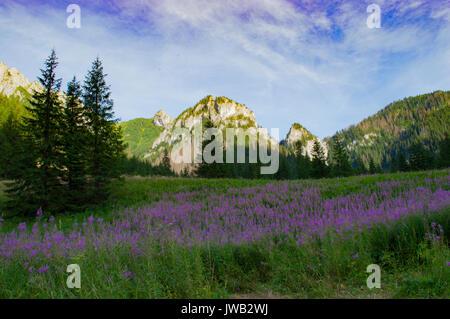 In den Nationalparks Hohe Tatra, Polen - Stockfoto