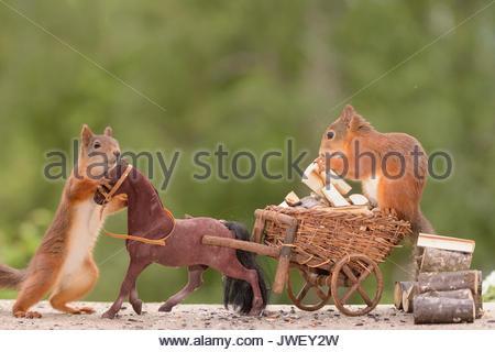 Eichhörnchen mit Pferd und einer auf einem Wagen mit Brennholz geladen - Stockfoto