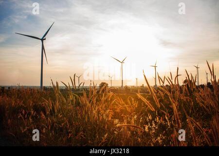 Gras im Wind Turbine Bauernhof mit goldenen Licht am Morgen. - Stockfoto