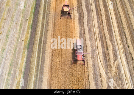 Luftbild von zwei Mähdrescher in reife Golden Weizenfeld. Ernte im Sommer - Stockfoto