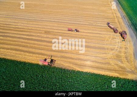 Luftaufnahme der goldene Weizen Feld während der Ernte im Sommer. Mähdrescher und Traktoren mit Anhänger arbeiten - Stockfoto