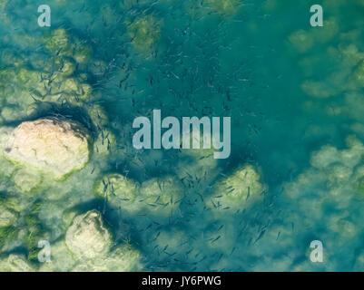 Luftaufnahme des thinlip Meeräsche von Skradinski Buk, Krka Nationalpark - Stockfoto