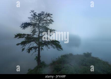 Einsamer Baum auf nebligen See in der Morgendämmerung - Stockfoto