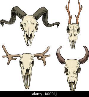 Biologie oder Anatomie-Illustration. gravierte handgezeichnete im alten Skizze und Vintage-Stil. Schädel oder Skelett - Stockfoto