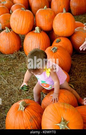 Kleine weibliche Kleinkind spielen in einem Patch der Kürbisse. - Stockfoto