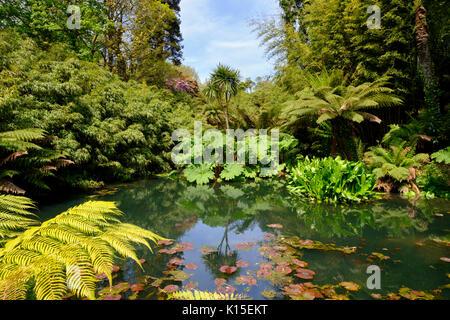 Dschungel, die Verlorenen Gärten von Heligan, in der Nähe von St Austell, Cornwall, England, Vereinigtes Königreich - Stockfoto