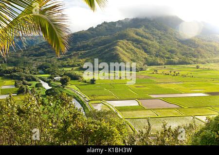 Taro Felder in Hanalei Valley nach einer jüngsten Niederschlag auf der hawaiianischen Insel Kauai - Stockfoto
