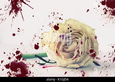 Weiße Rose im Blut auf weißen Hintergrund. nicht isoliert - Stockfoto