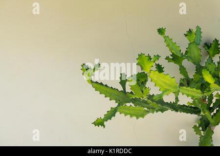 Cactus gegen eine rustikale Mauer - Stockfoto