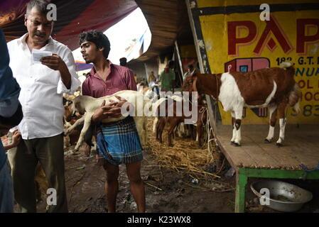Ziege Händler besetzt sind für den Kauf von Vieh aus dem Viehmarkt von Kolkata auf August 30,2017. - Stockfoto