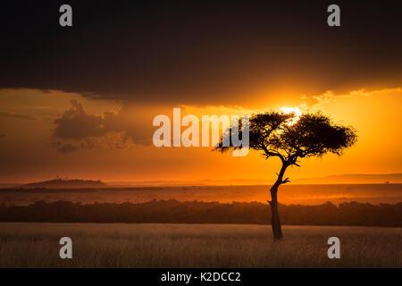 Sonnenuntergang über der Savanne Landschaft Bild mit einem einsamen (Acacia) Baum, Masai Mara NR, Kenia - Stockfoto