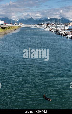 Eine nördliche Sea Otter schwebt schlafend in den Kamishak Bay an der Stadt von Homer Port & Hafen Marina in Homer, - Stockfoto