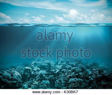 Schönen Meeresboden - Stockfoto