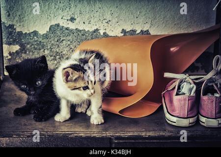 Zwei niedlichen Baby Katzen mit Gießkanne und alte Schuhe. - Stockfoto