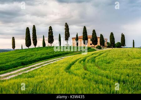 Val d'Orcia, Toskana, Italien. Ein einsames Bauernhaus mit Zypressen stehen in der Linie im Vordergrund. - Stockfoto