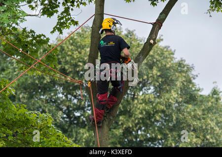 Baum Chirurg in Schutzausrüstung arbeiten, mit Kletterseilen für Safety & holding Kettensäge, hoch in den Filialen - Stockfoto