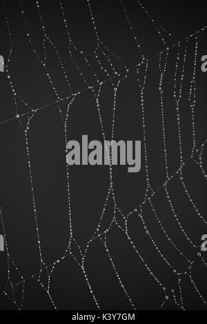 Wasser perlen Sekt auf Spinnennetz Filamente - Stockfoto