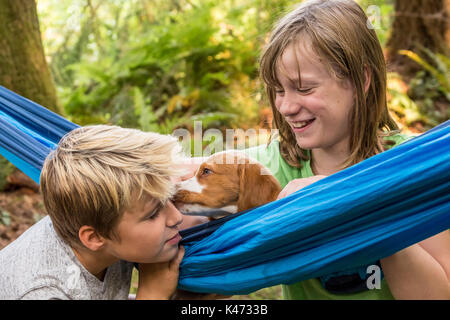 Zwei Monate alten Brittany Spaniel 'Archie' in einer Hängematte ausruhen, lecken ein elf Jahre alter Junge, ein - Stockfoto