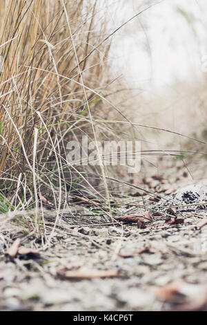 Pfad in der nebligen Wald unter hohen trockenes Gras im Herbst. Selektiver Fokus - Stockfoto