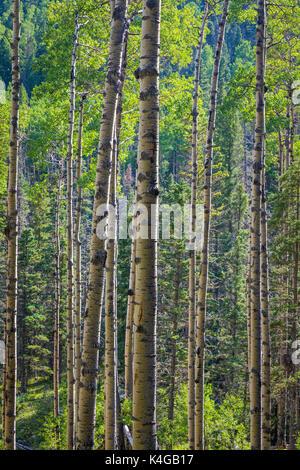 Der pecos Wilderness ist eine geschützte Wildnis im Santa Fe National Forest und Carson National Forest. Der pecos - Stockfoto