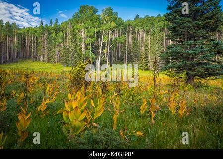 Der pecos Wilderness ist eine geschützte Wildnis im Santa Fe National Forest und Carson National Forest. - Stockfoto