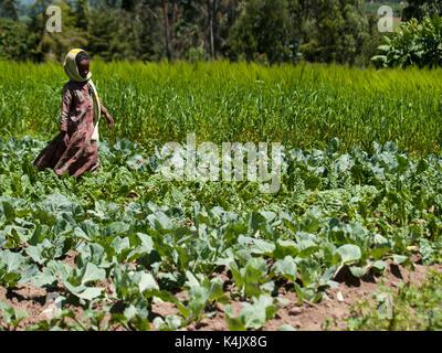 Ein junges Mädchen läuft durch ein Feld von Kohl, Äthiopien, Afrika - Stockfoto