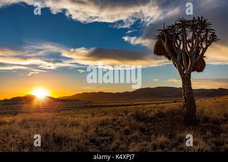 Sonnenuntergang in Namibia mit Köcherbaum im Vordergrund - Stockfoto