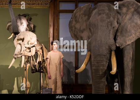 Wien, Österreich - 23 August 2017: Exponate und Ausstellungen im Museum für Naturkunde, Wien. - Stockfoto