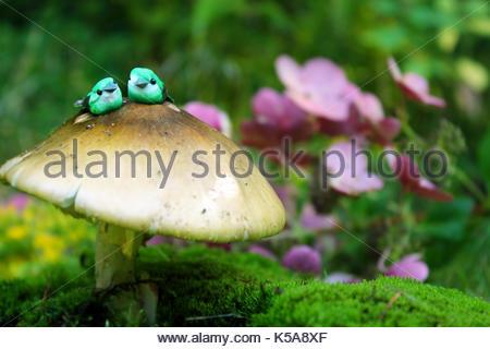Liebe Vögel auf Pilz - Stockfoto