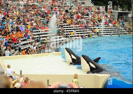 San Diego, Vereinigte Staaten - 1 August 2013: Killer Whale in San Diego Sea World, San Diego, USA. - Stockfoto