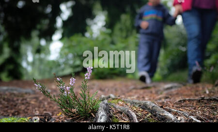 Mutter und Kind nehmen Sie einen Wald spazieren Hand in Hand durch den Wald - Stockfoto