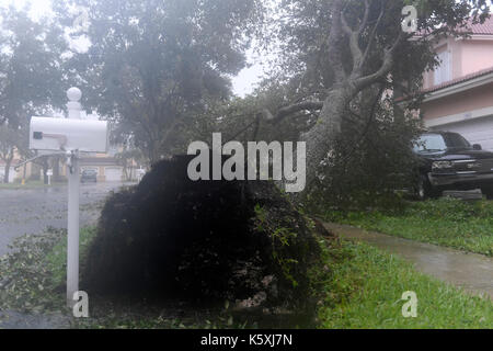 Miramar, FL, USA. 10 Sep, 2017. Der Baum vor ein Haus in den Weinbergen an der Monarch Seen im Westen Miramar durch - Stockfoto