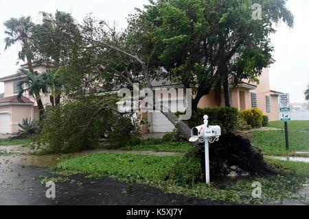 Miramar, FL, USA. 10 Sep, 2017. Starke Winde und Regen vom Hurrikan Irma die Bäume, Zweige und Briefkästen in Monarch - Stockfoto