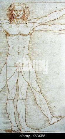 Leonardo da Vincis Zeichnung der menschlichen männlichen Anatomie zeigt die Biegung des Muskeln wenn Beine trennten - Stockfoto