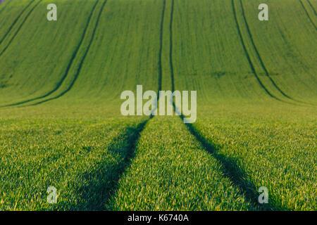 Landwirtschaftliche Flächen mit frischen Pflanzen. Großtechnische Produktion, Landwirtschaft, Lebensmittelproduktion - Stockfoto