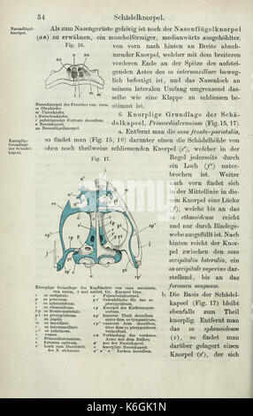 Die Anatomie des Frosches (Seite 34) BHL 33481467 - Stockfoto