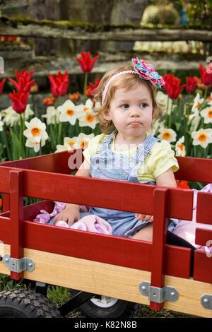 Schmollendes kleinkind Mädchen im Wagen im Tulip Garten in Mount Vernon, Washington, USA - Stockfoto
