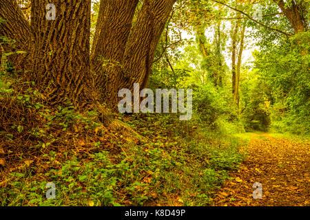 Farbenprächtige Herbstlandschaft mit Bäumen auf der linken Seite und einen Pfad auf der rechten Seite mit viel Rot - Stockfoto