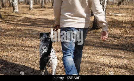 Mann geht mit Hund im Herbst Park am sonnigen Tag. Mann mit einem Dalmatiner Hund, Ansicht von der Rückseite - Stockfoto