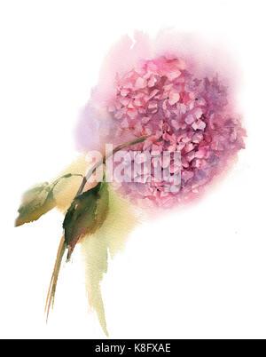 Sammlung aquarell Handzeichnung Sommer iris Blumen Blumenstrauß - Stockfoto