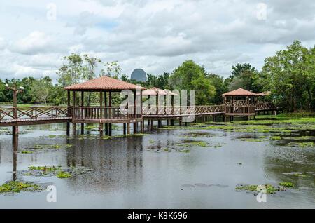 Taman Rekreasi Tasik Melati, Perlis, Malaysia - Tasik Melati ist ein Feuchtgebiet mit der Wildpflanze - Stockfoto