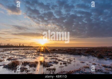 Überflutet, Frost bedeckt Marsh bei Sonnenaufgang, Biebrza, Polen, Februar - Stockfoto