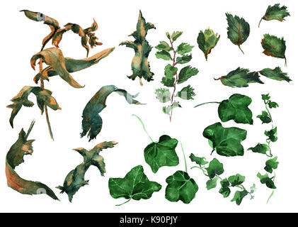 Efeu Blätter ornament