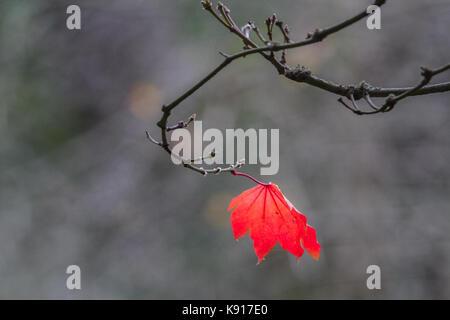 London, Großbritannien. 21 Sep, 2017. UK Wetter. Lebendige Farben der Blätter auf Anzeige in Wimbledon Common signalisieren - Stockfoto