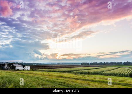 Dramatische Sommer Sonnenuntergang über eine bescheidene Bauernhof im schwarzen Schmutz Region von Pine Island, - Stockfoto