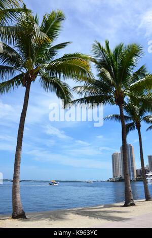Palmen in Miami Beach, Florida - Stockfoto