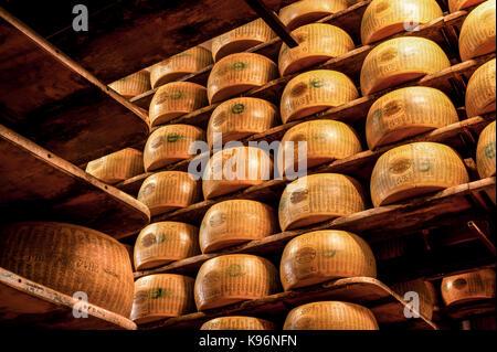 Ganze Parmigiano-Reggiano-Käse sitzen auf den Regalen während des Alterungsprozesses - Stockfoto