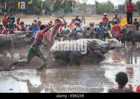 Barat Jereweh, Sumbawa, Indonesien - 10. September 2017: Lokale buffalo Race Bewerb auf der Insel Sumbawa, Indonesien - Stockfoto